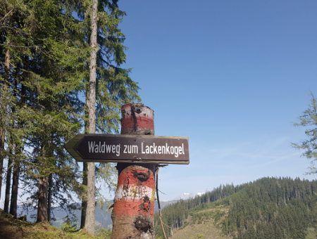 Wandelroute: beklim de Lackenkogel in Flachau