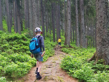 Teken, het risico in de bergen en hoe ze te voorkomen