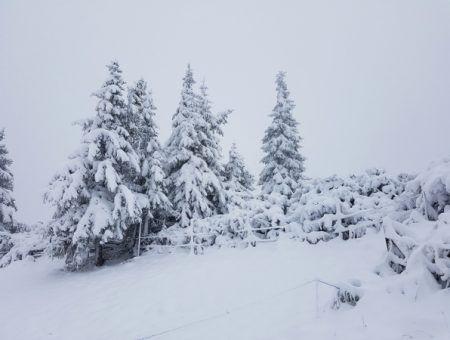 Deze week weer sneeuw in Oostenrijk?!