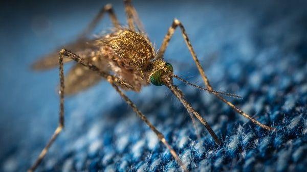 anti muggen tips voor reizigers