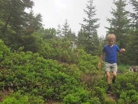 Review: Insectenwerende wandelbroek van Reima getest