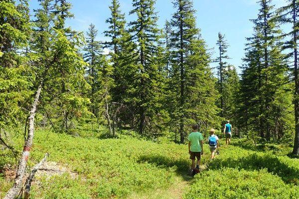 De wandeling naar de Steinalm is door het bos