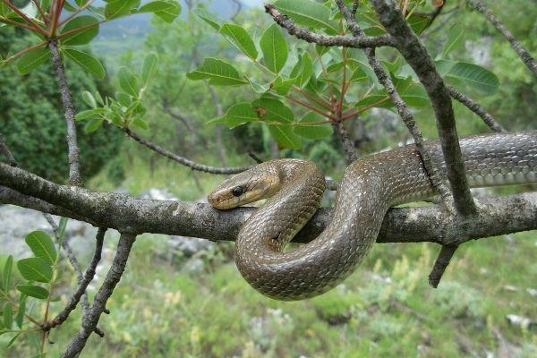slangen oostenrijk