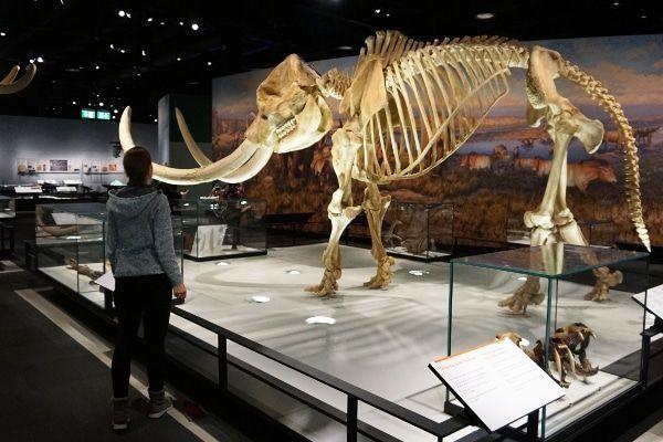 Royal Alberta Museum bezoek