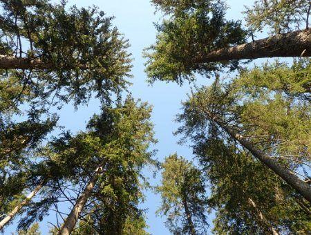 6 redenen om vaker onder de bomen te wandelen