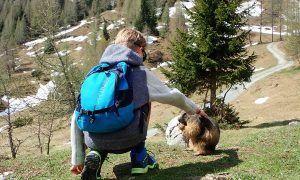 Wandelen in Filzmoos: op zoek naar alpenmarmotten