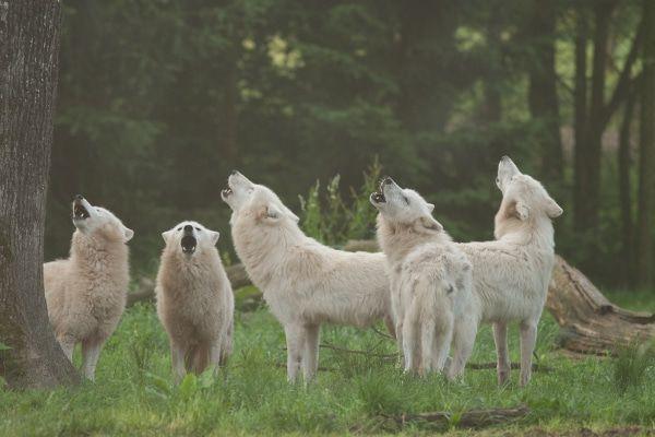 dieren spotten in het wildpark
