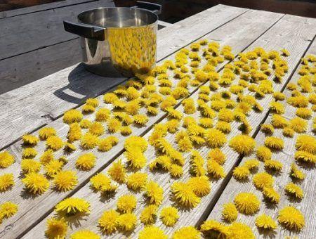 Recept: paardenbloem honing zelf maken