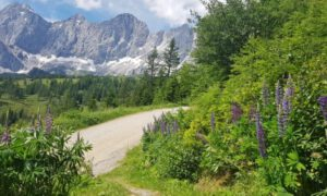 Culinaire wandelingen in Schladming – Dachstein: sterrengerechten in de berghut