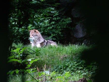 Alpenzoo Innsbruck – de leukste dierentuin van de Alpen
