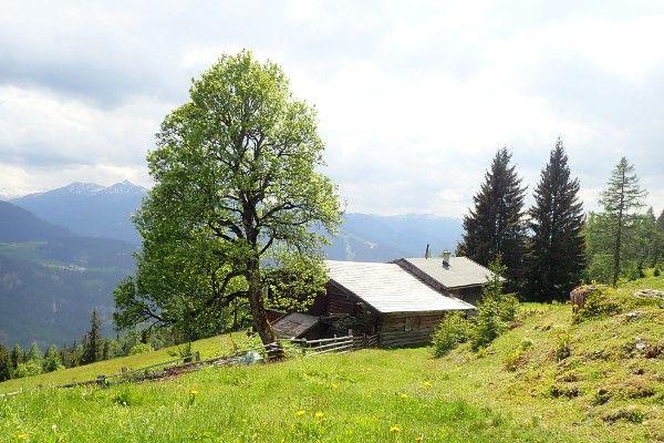 Bomen bij berghut