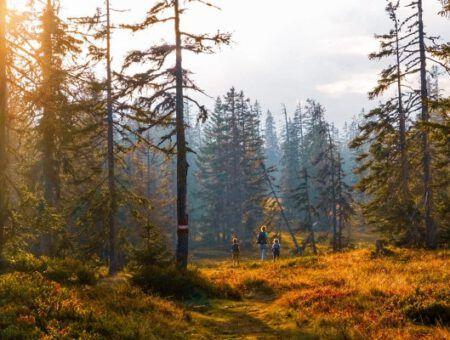 Herfstbeelden: zo kleurrijk ziet herfst in Oostenrijk er uit